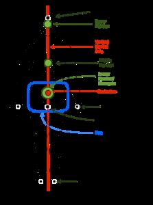internal body structure